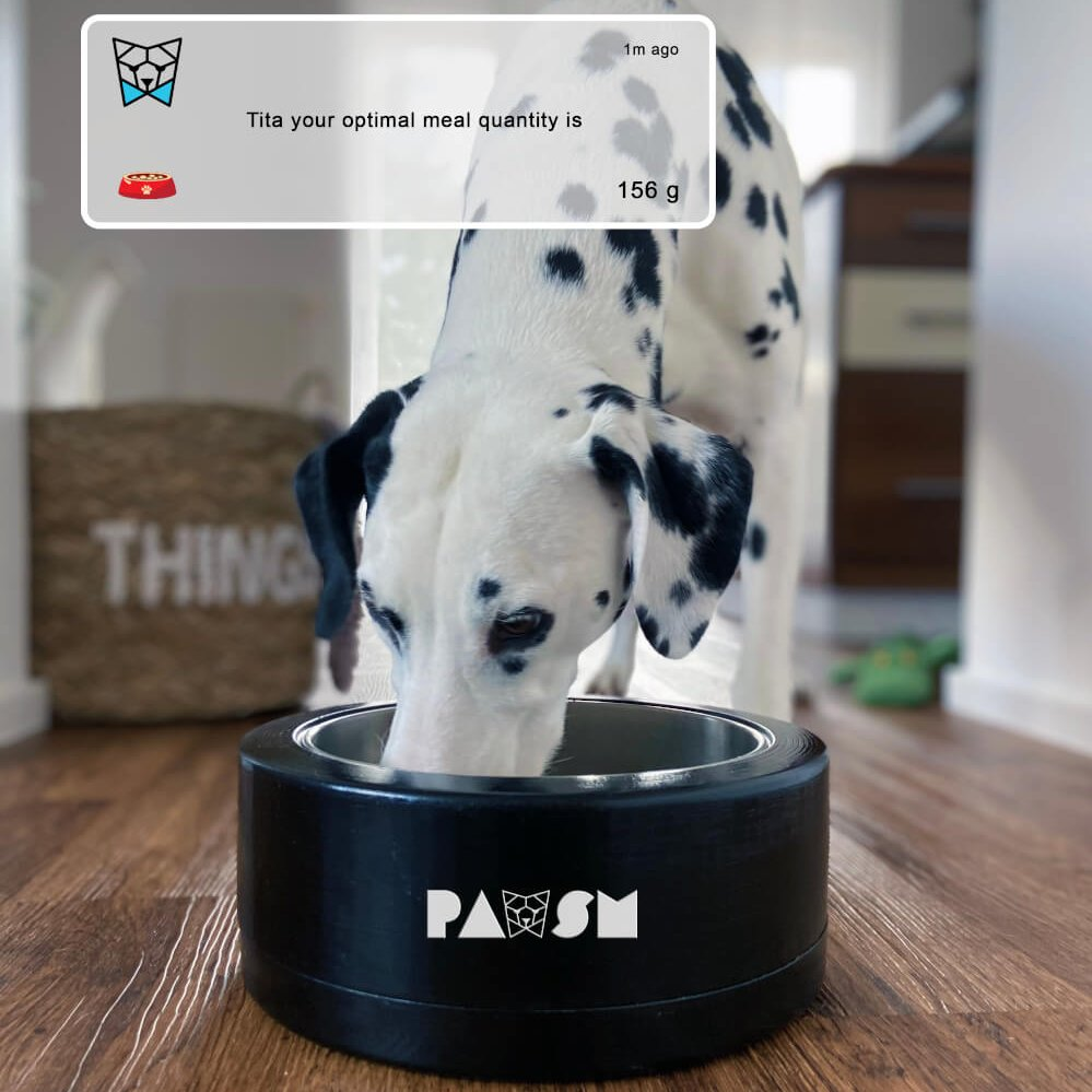 Photo of dalmatian eating out of PAWSM Bowl